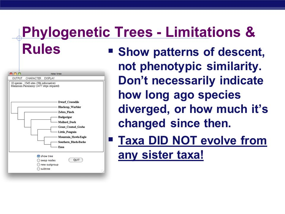 Phylogenetic Trees - Limitations & Rules