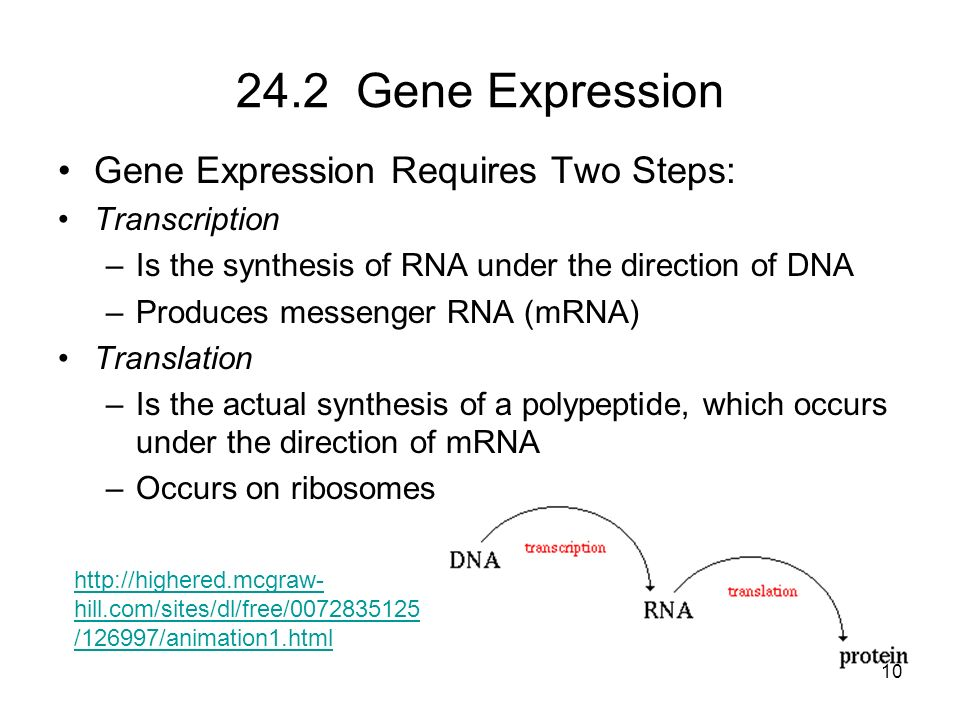 24.2 Gene Expression Gene Expression Requires Two Steps: Transcription