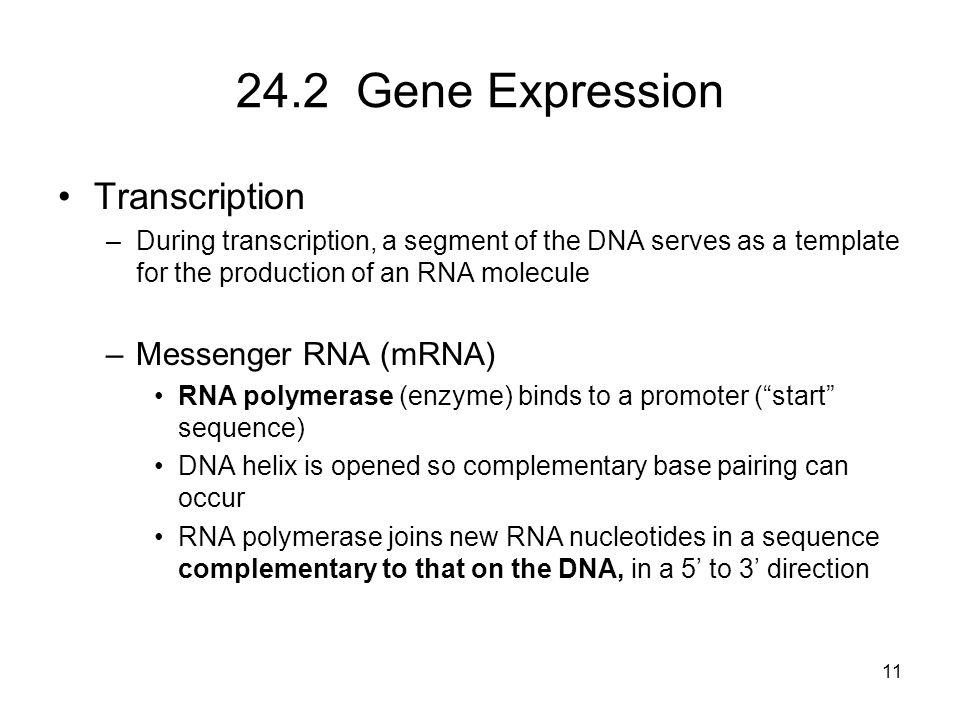 24.2 Gene Expression Transcription Messenger RNA (mRNA)