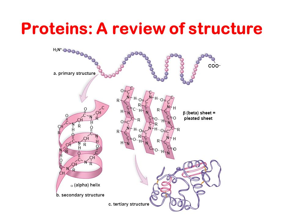 Proteins: A review of structure