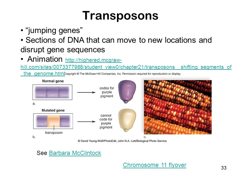 Transposons jumping genes
