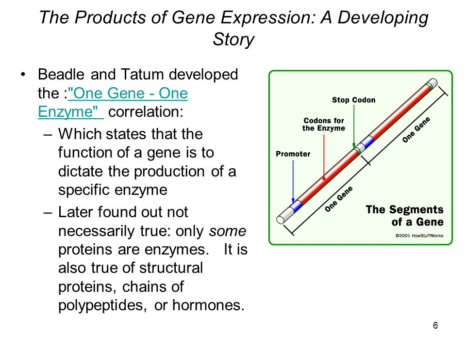 The Products of Gene Expression: A Developing Story