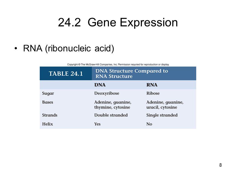 24.2 Gene Expression RNA (ribonucleic acid)