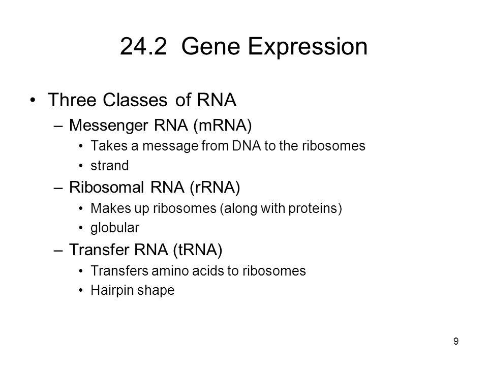 24.2 Gene Expression Three Classes of RNA Messenger RNA (mRNA)
