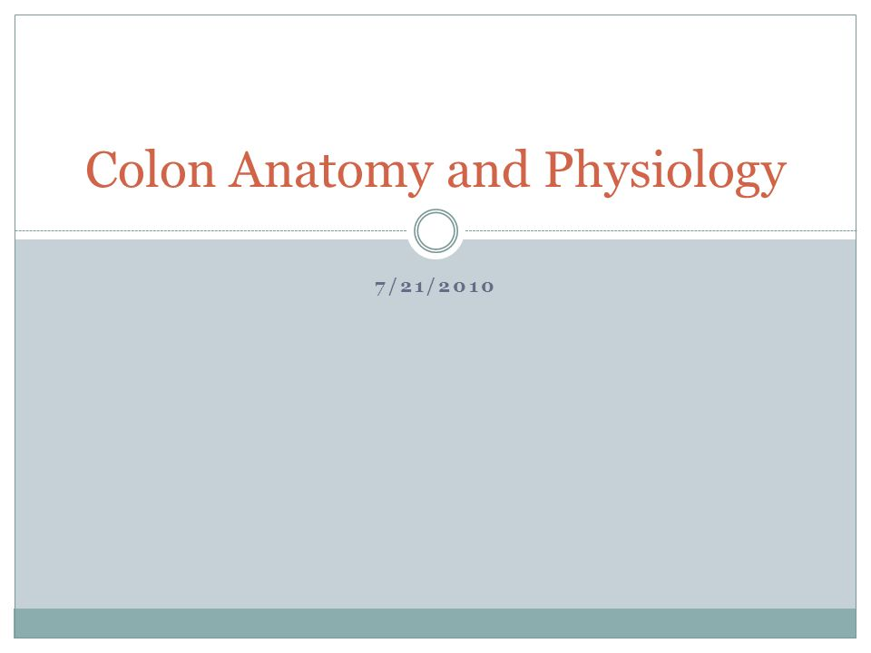 Colon Anatomy and Physiology