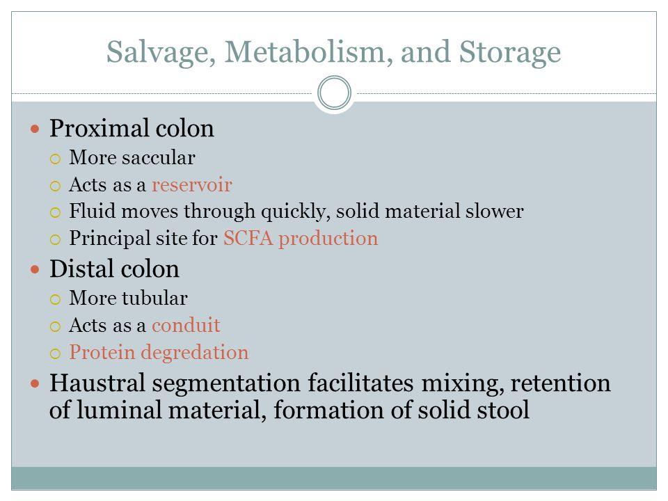 Salvage, Metabolism, and Storage