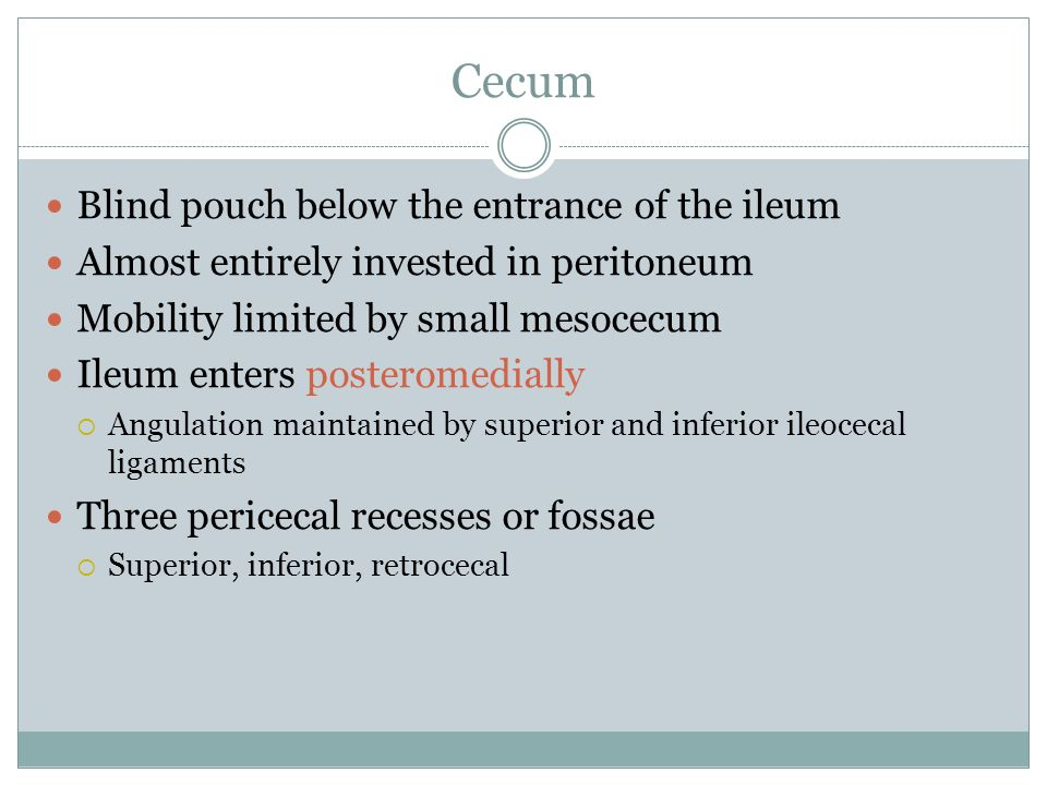 Cecum Blind pouch below the entrance of the ileum