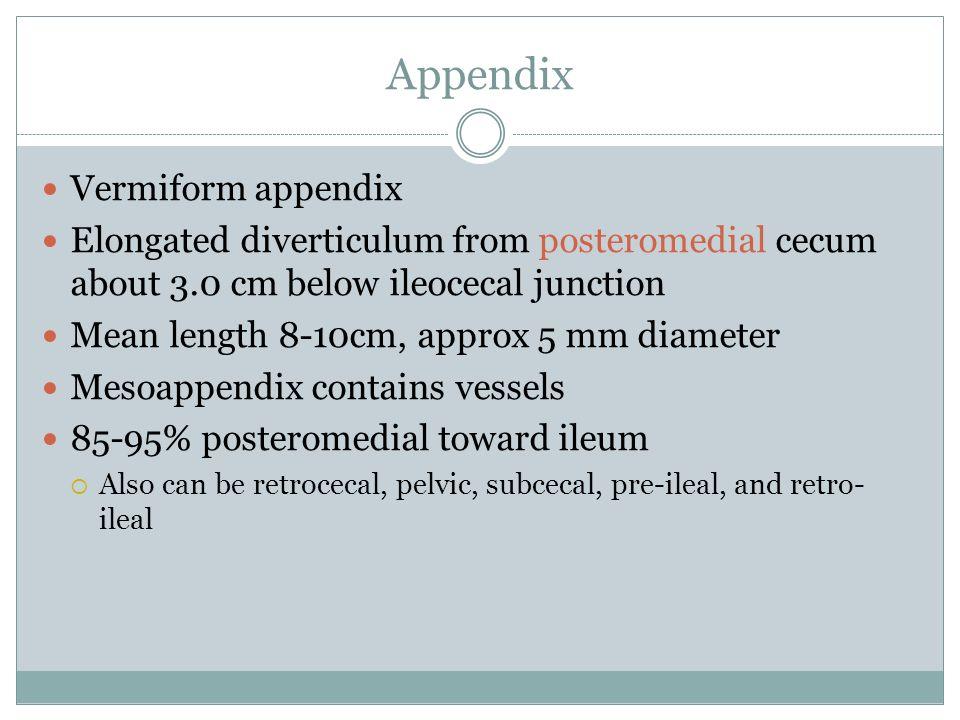 Appendix Vermiform appendix
