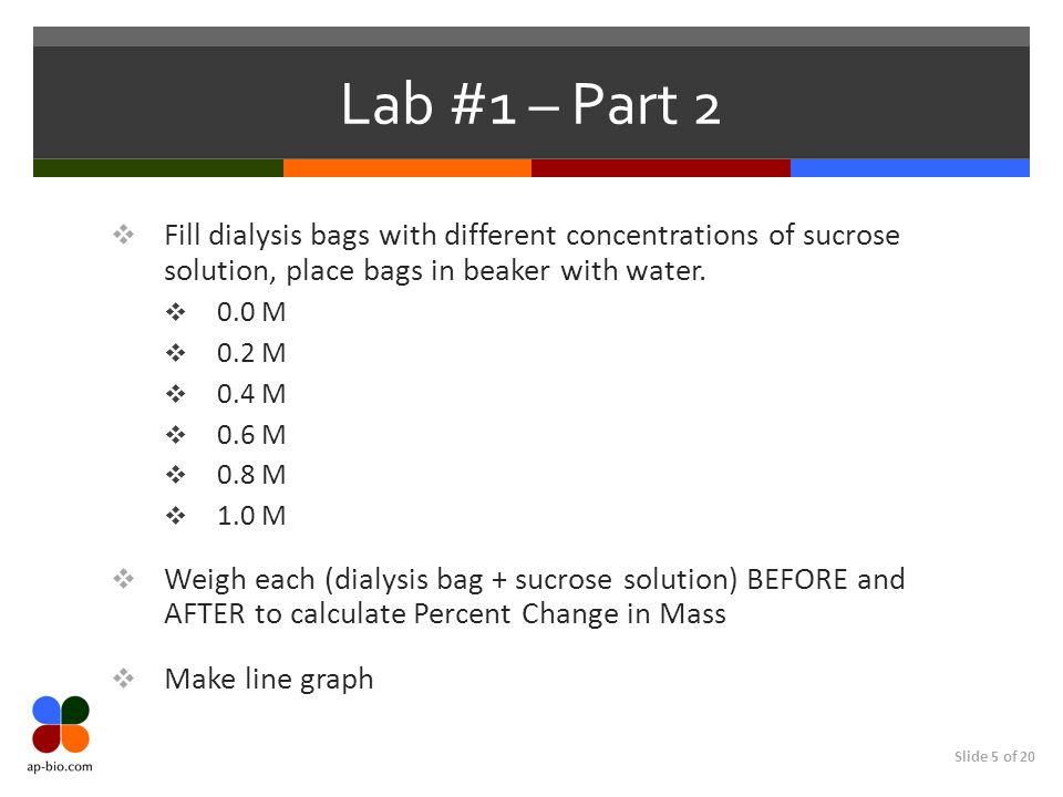 Lab #1 – Part 2 Fill dialysis bags with different concentrations of sucrose solution, place bags in beaker with water.