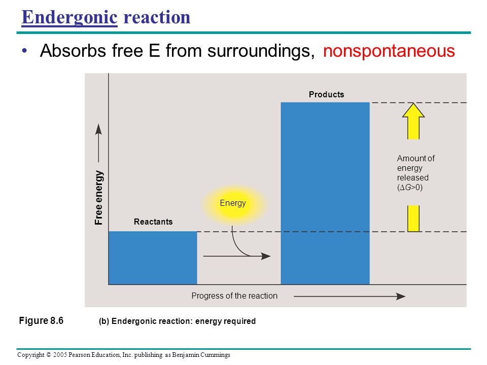 (b) Endergonic reaction: energy required