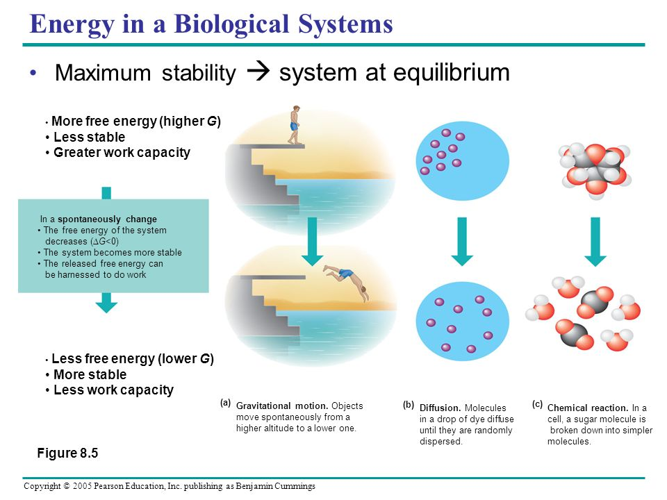 Energy in a Biological Systems
