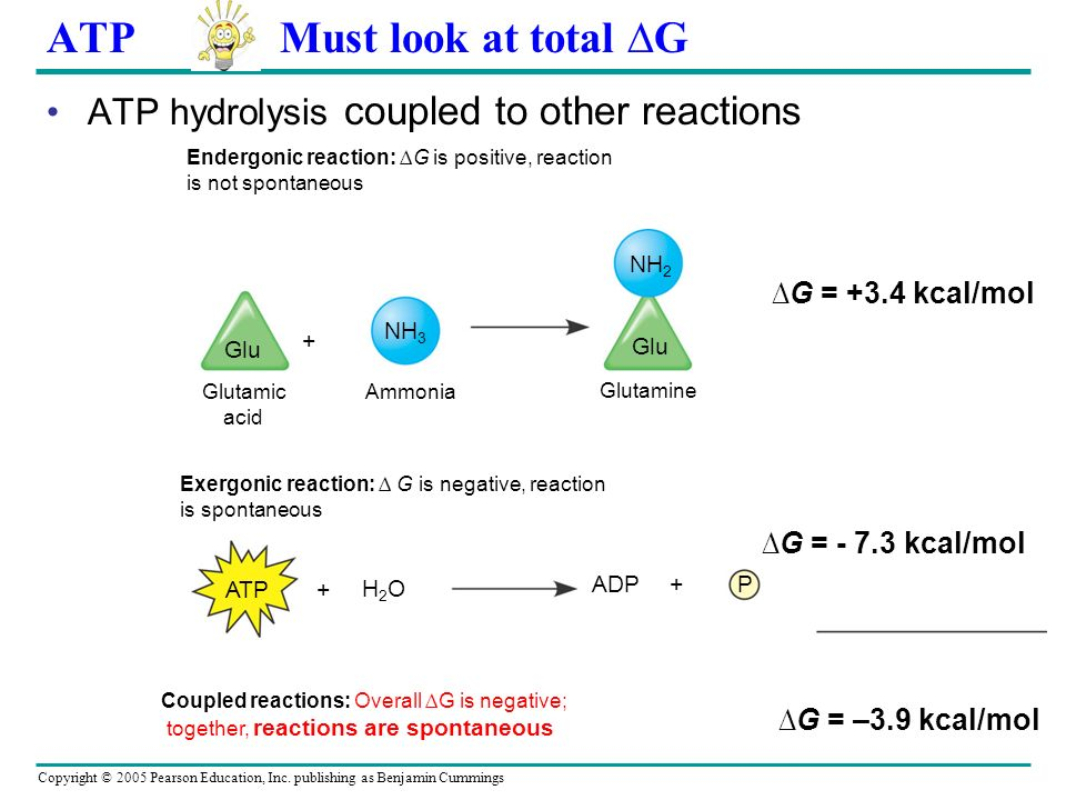 ATP Must look at total ∆G