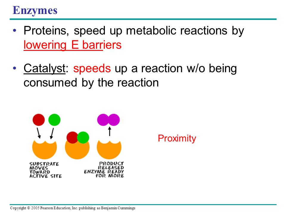 Proteins, speed up metabolic reactions by lowering E barriers