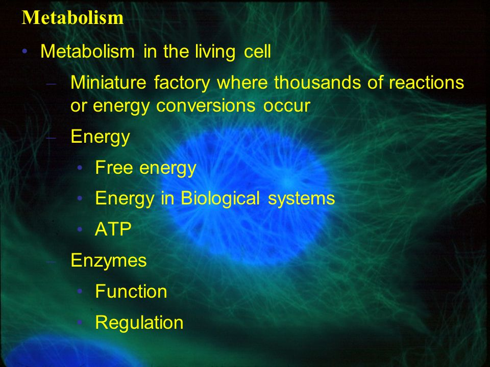 Metabolism Metabolism in the living cell