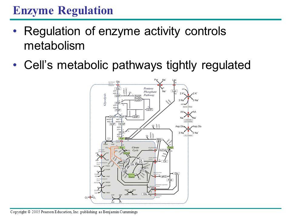 Enzyme Regulation Regulation of enzyme activity controls metabolism.