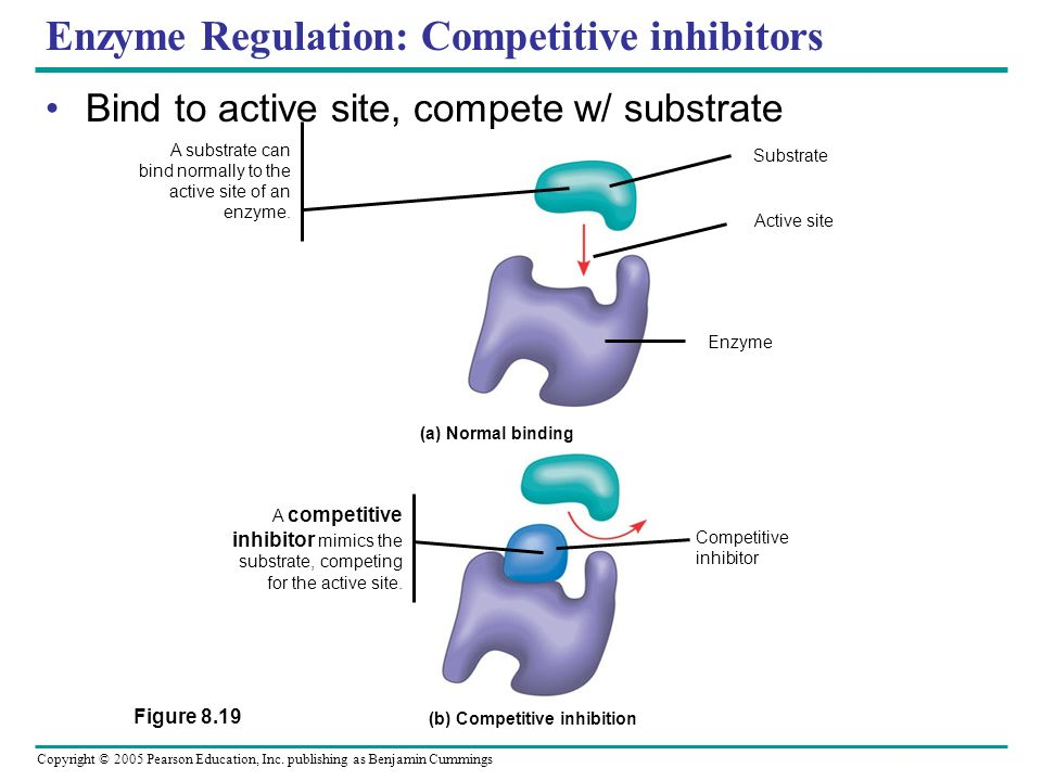 Enzyme Regulation: Competitive inhibitors