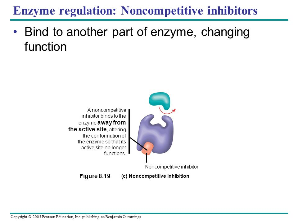 Enzyme regulation: Noncompetitive inhibitors