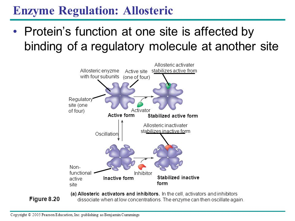 Enzyme Regulation: Allosteric