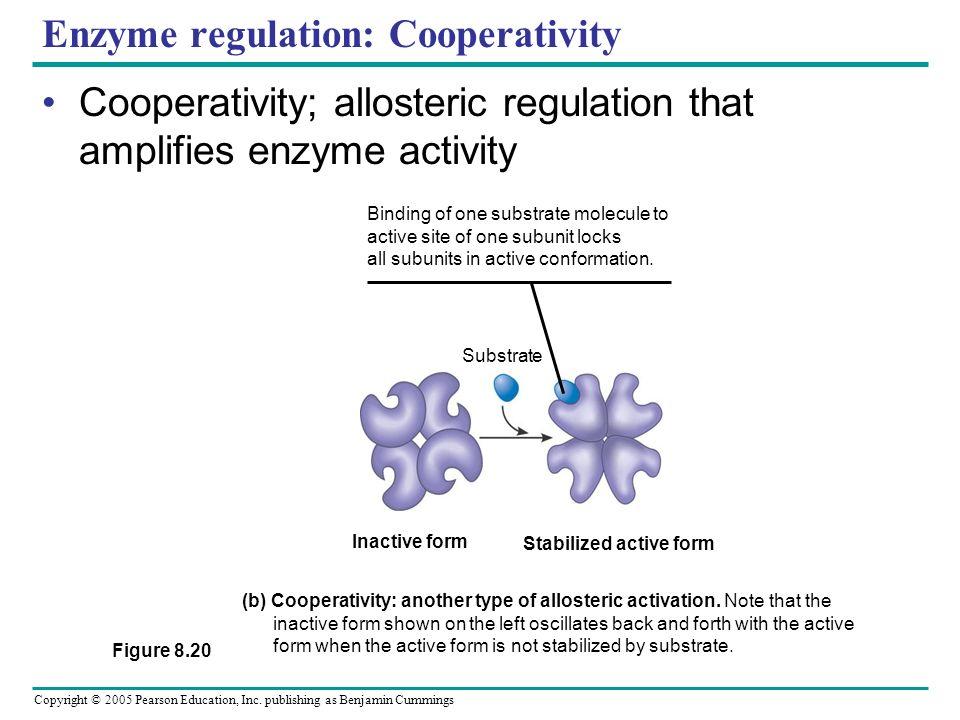 Enzyme regulation: Cooperativity