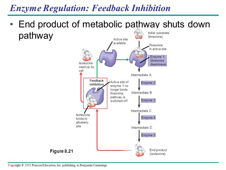 Enzyme Regulation: Feedback Inhibition