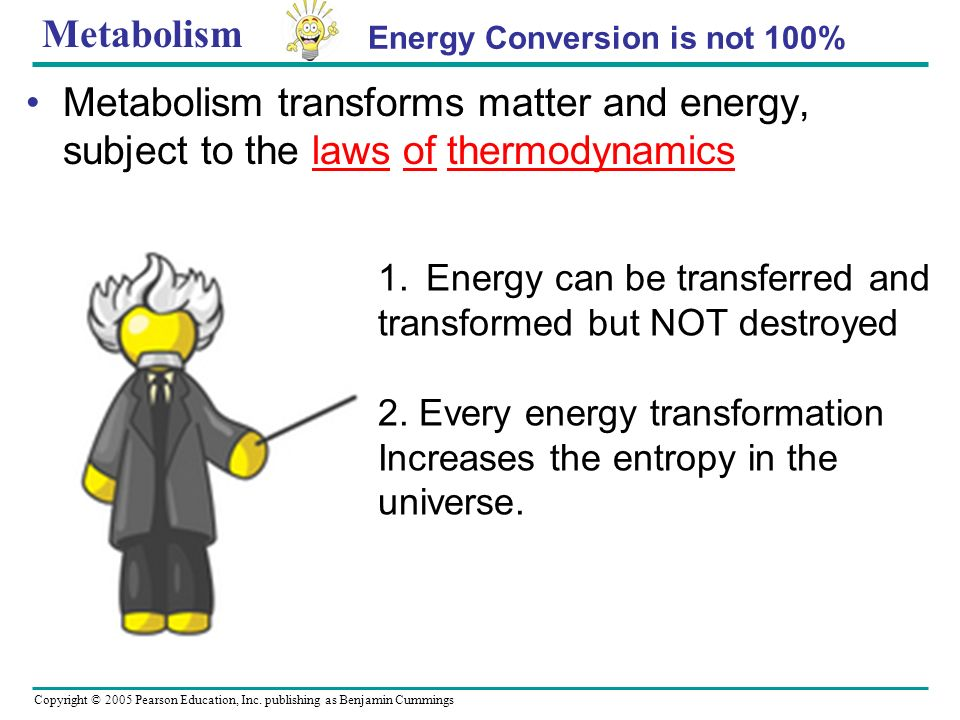 Metabolism Energy Conversion is not 100% Metabolism transforms matter and energy, subject to the laws of thermodynamics.