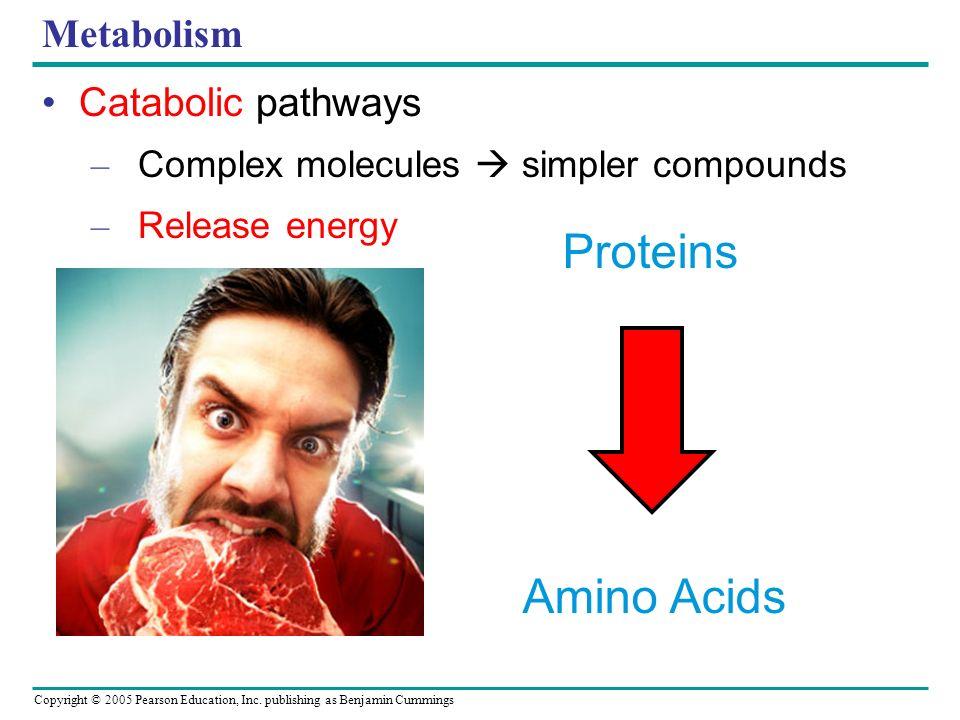 Proteins Amino Acids Metabolism Catabolic pathways