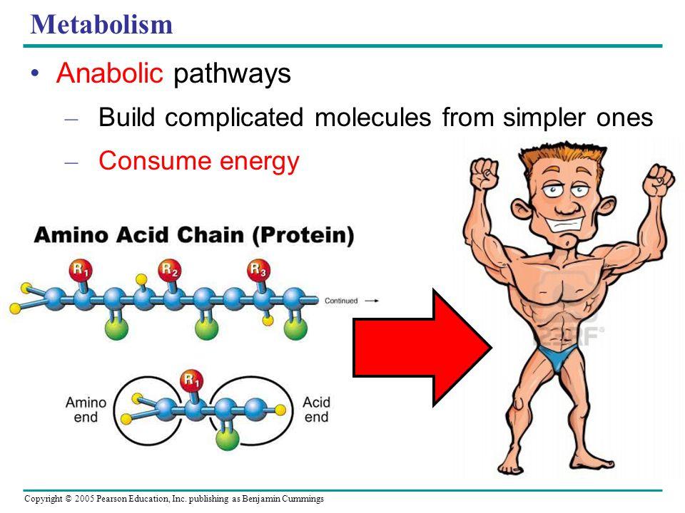 Metabolism Anabolic pathways