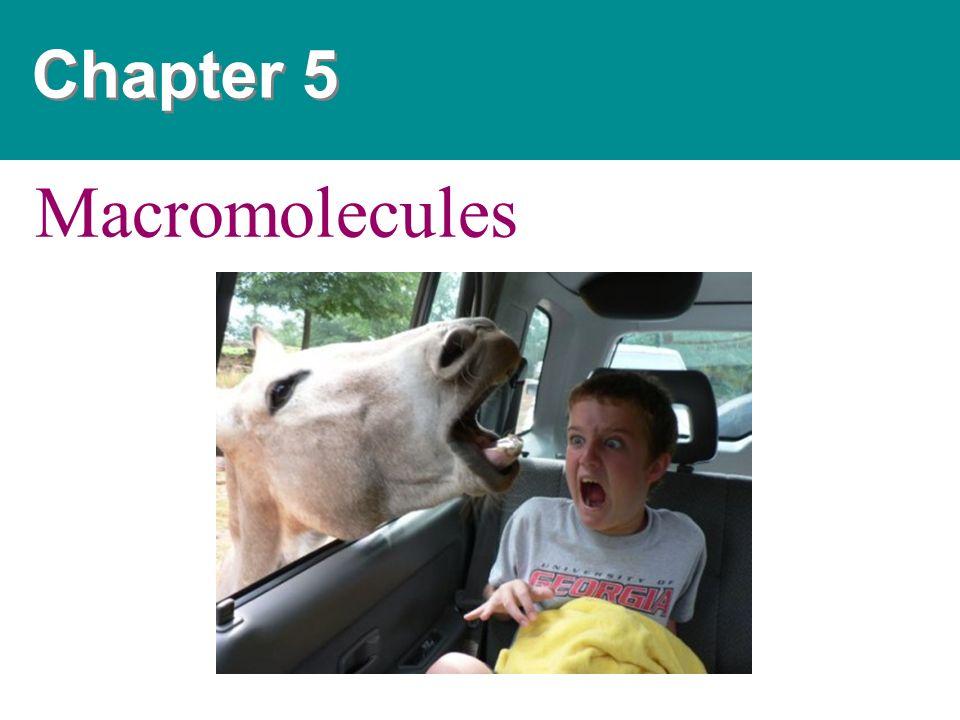 Chapter 5 Macromolecules