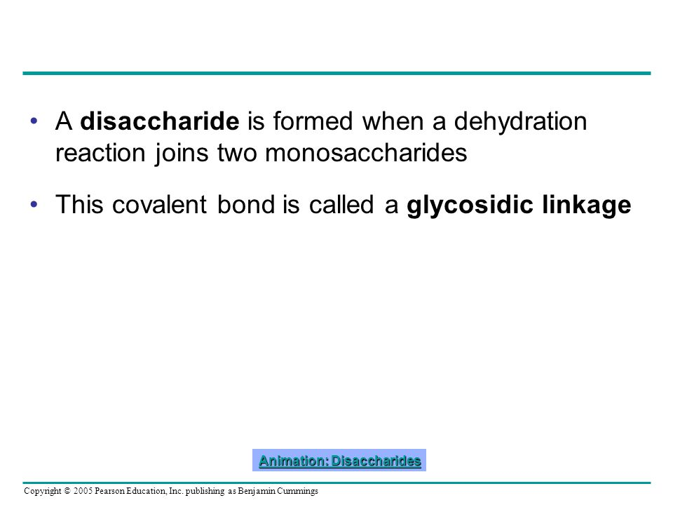 Animation: Disaccharides