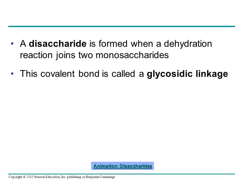 Animation: Disaccharides