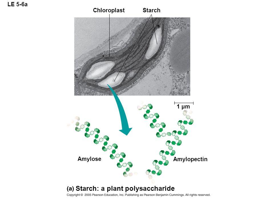 Starch: a plant polysaccharide