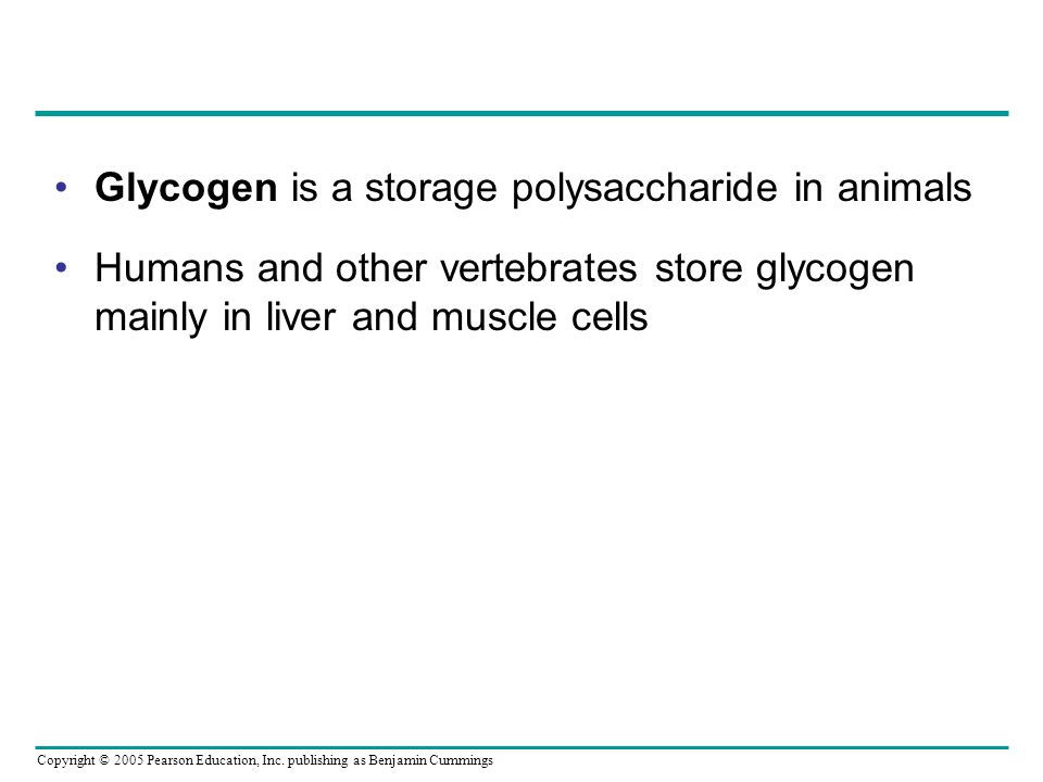 Glycogen is a storage polysaccharide in animals