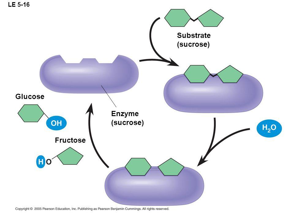 LE 5-16 Substrate (sucrose) Glucose Enzyme (sucrose) Fructose