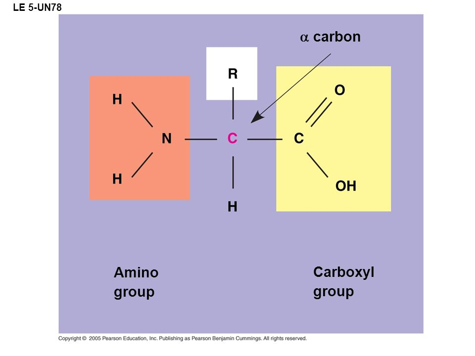 LE 5-UN78 a carbon Amino group Carboxyl group