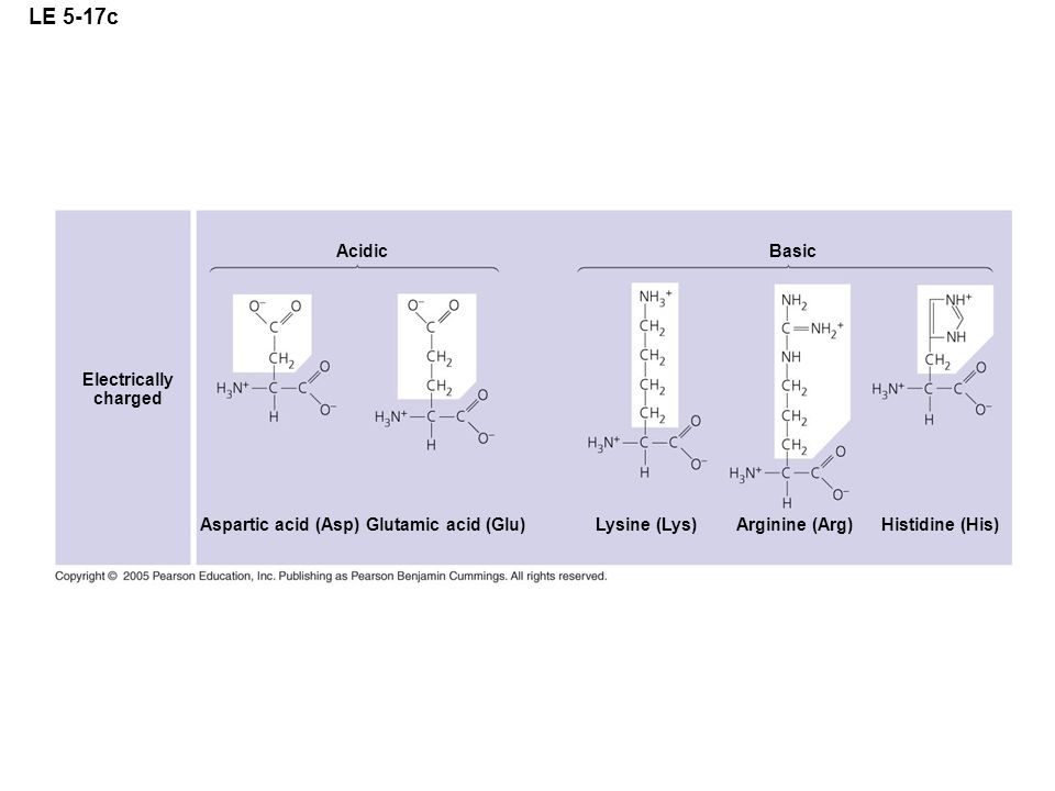 LE 5-17c Acidic Basic Electrically charged Aspartic acid (Asp)