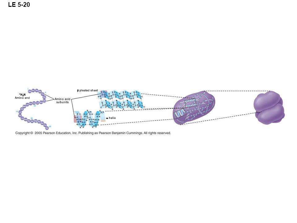 LE 5-20 b pleated sheet +H3N Amino end Amino acid subunits  helix