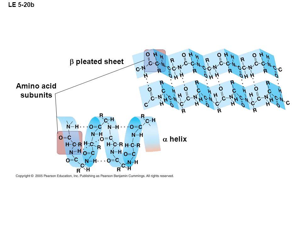 LE 5-20b b pleated sheet Amino acid subunits  helix
