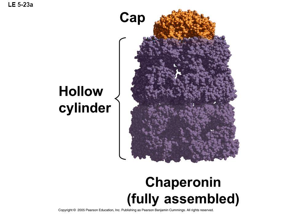 Chaperonin (fully assembled)