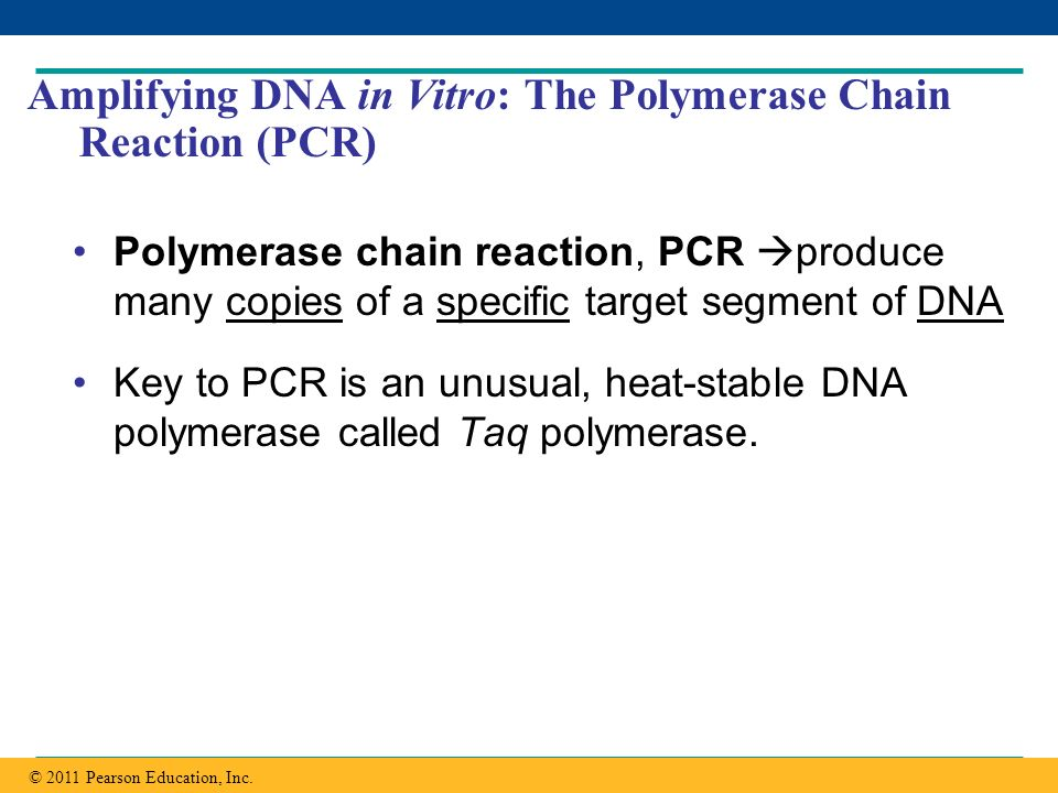 Amplifying DNA in Vitro: The Polymerase Chain Reaction (PCR)
