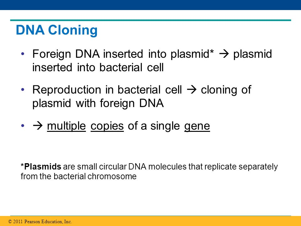 DNA Cloning Foreign DNA inserted into plasmid*  plasmid inserted into bacterial cell.