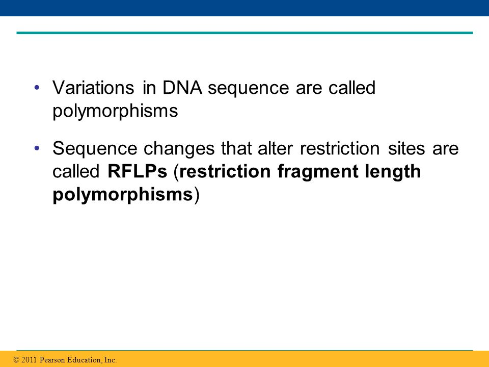 Variations in DNA sequence are called polymorphisms