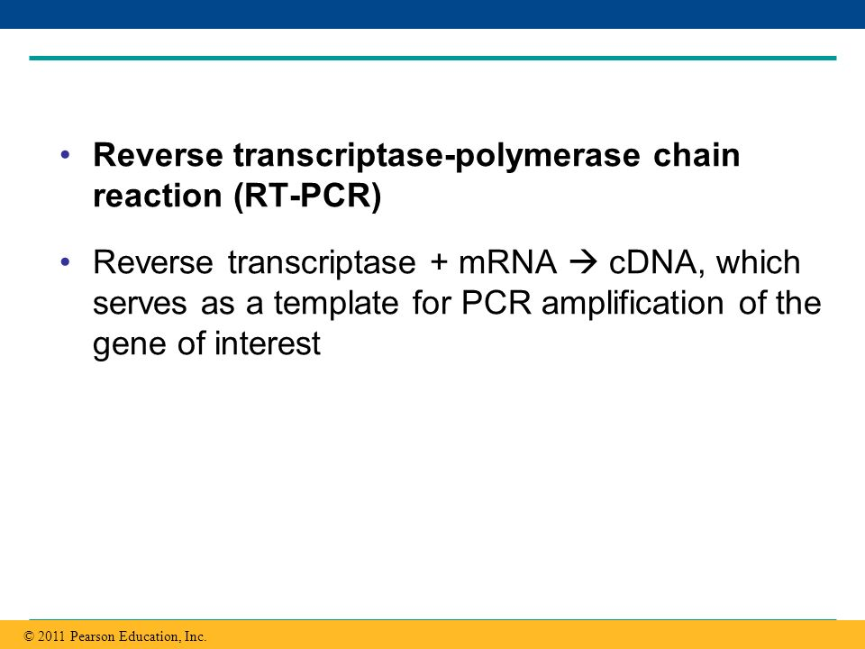 Reverse transcriptase-polymerase chain reaction (RT-PCR)