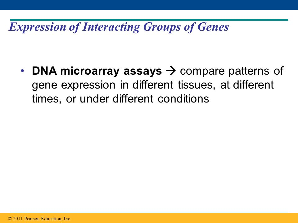 Expression of Interacting Groups of Genes