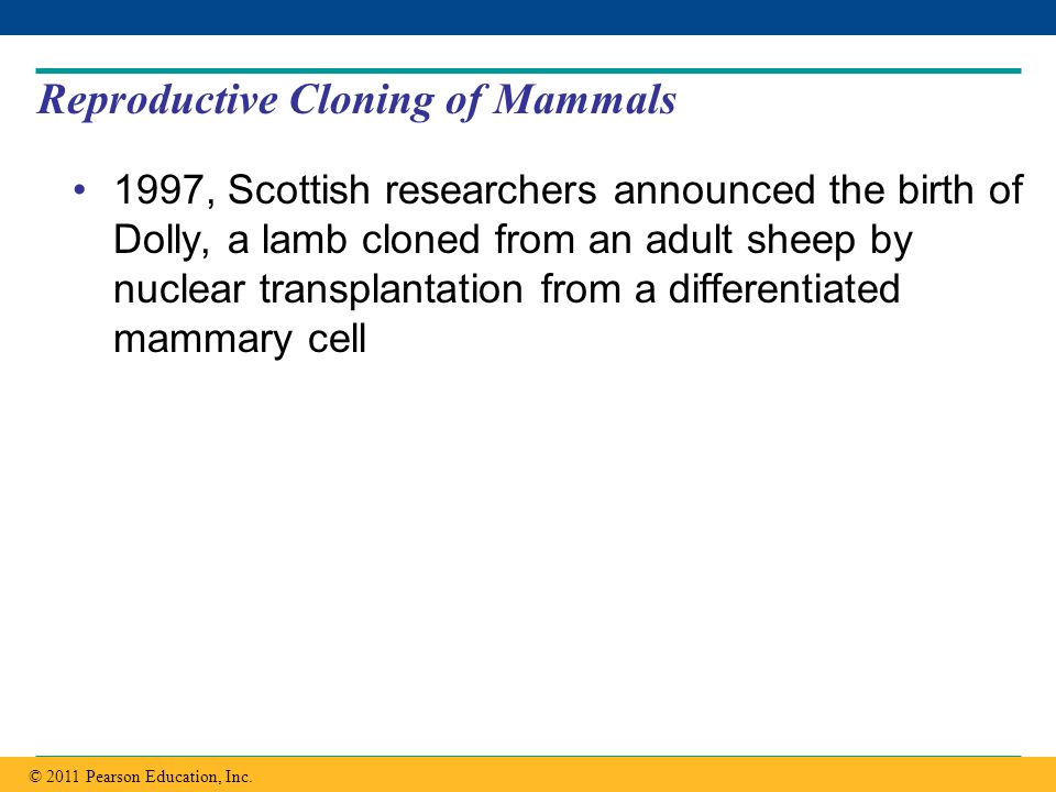 Reproductive Cloning of Mammals