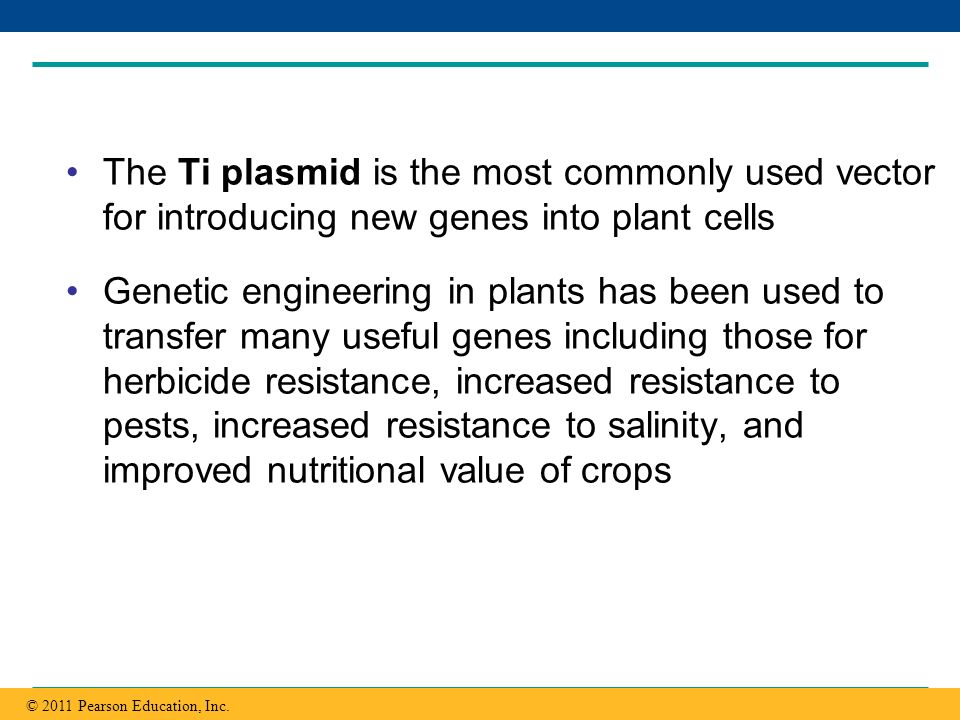 The Ti plasmid is the most commonly used vector for introducing new genes into plant cells