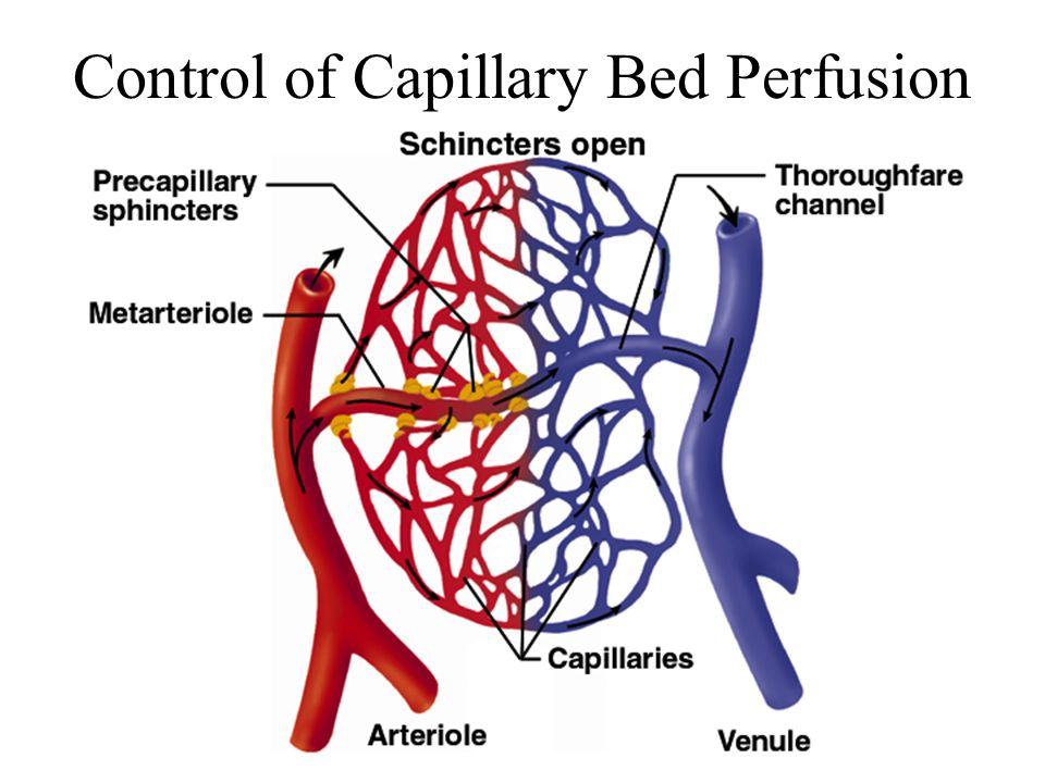 Control of Capillary Bed Perfusion