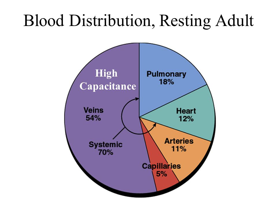 Blood Distribution, Resting Adult