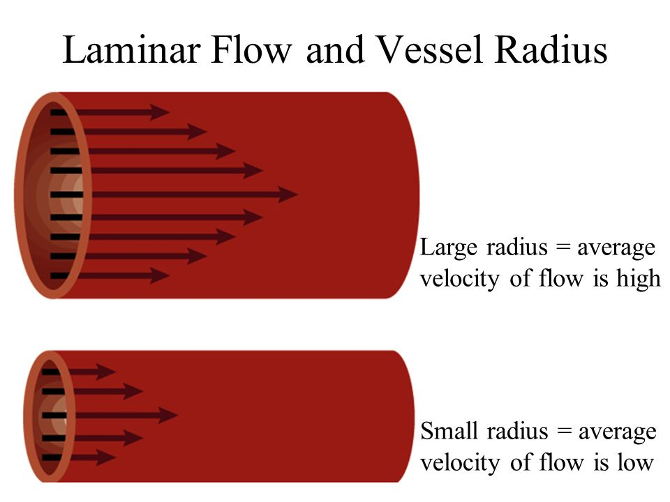 Laminar Flow and Vessel Radius