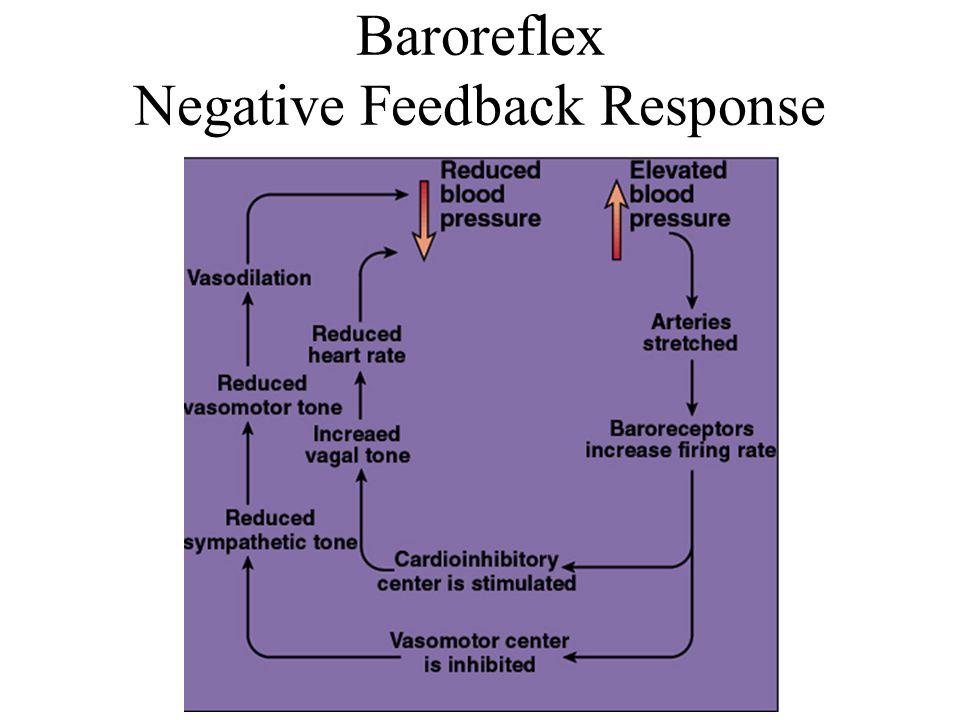 Baroreflex Negative Feedback Response