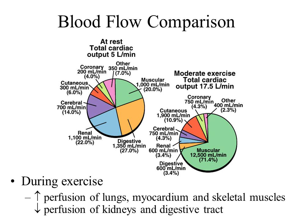 Blood Flow Comparison During exercise